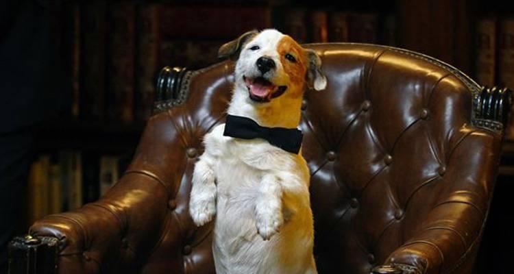 Imagen de la película 'Pancho, el perro millonario' (2014)