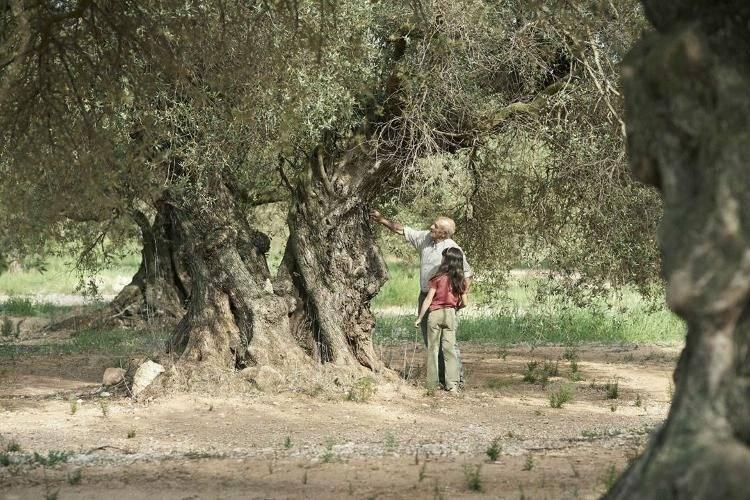 Abuelo y nieta junto al olivo familiar.