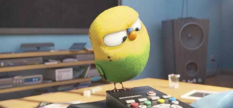 Un pájaro intentando cambiar de canal en la tele