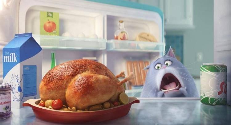 Chloe atacando el frigorífico