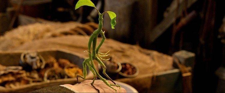 Un simpático animal fantástico con relevancia en la película de JK Rowling