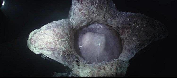Un huevo alien recien eclosionado