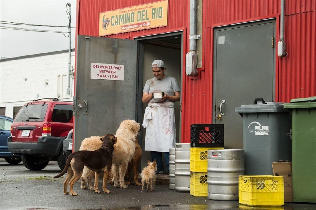 Perros mirando a un cocinero en Uno más de la familia.
