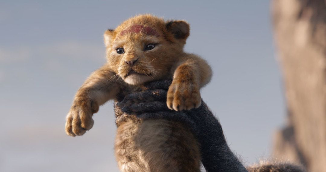 Simba en la foto del El Rey León en su remake 2019 (Crítica de la película)