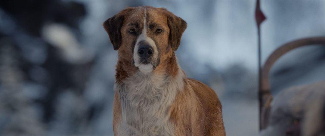 El perrete protagonista de La llamada de lo salvaje