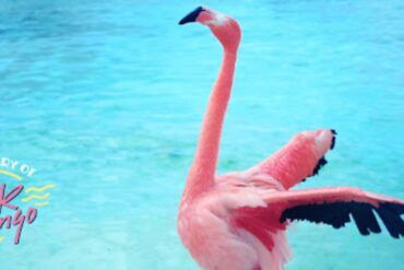 Crítica del documental The Mystery of the Pink Flamingo